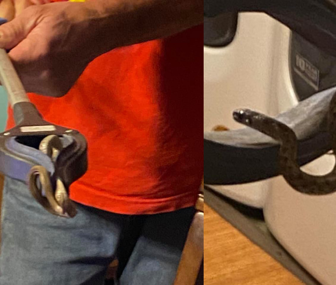 Woman discovers family of 18 snakes living under her bed (Photos)